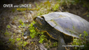 Poster-Over and Under Wildlife Crossings