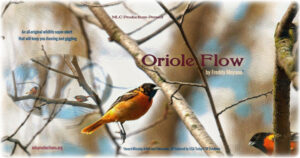 Poster-Oriole Flow